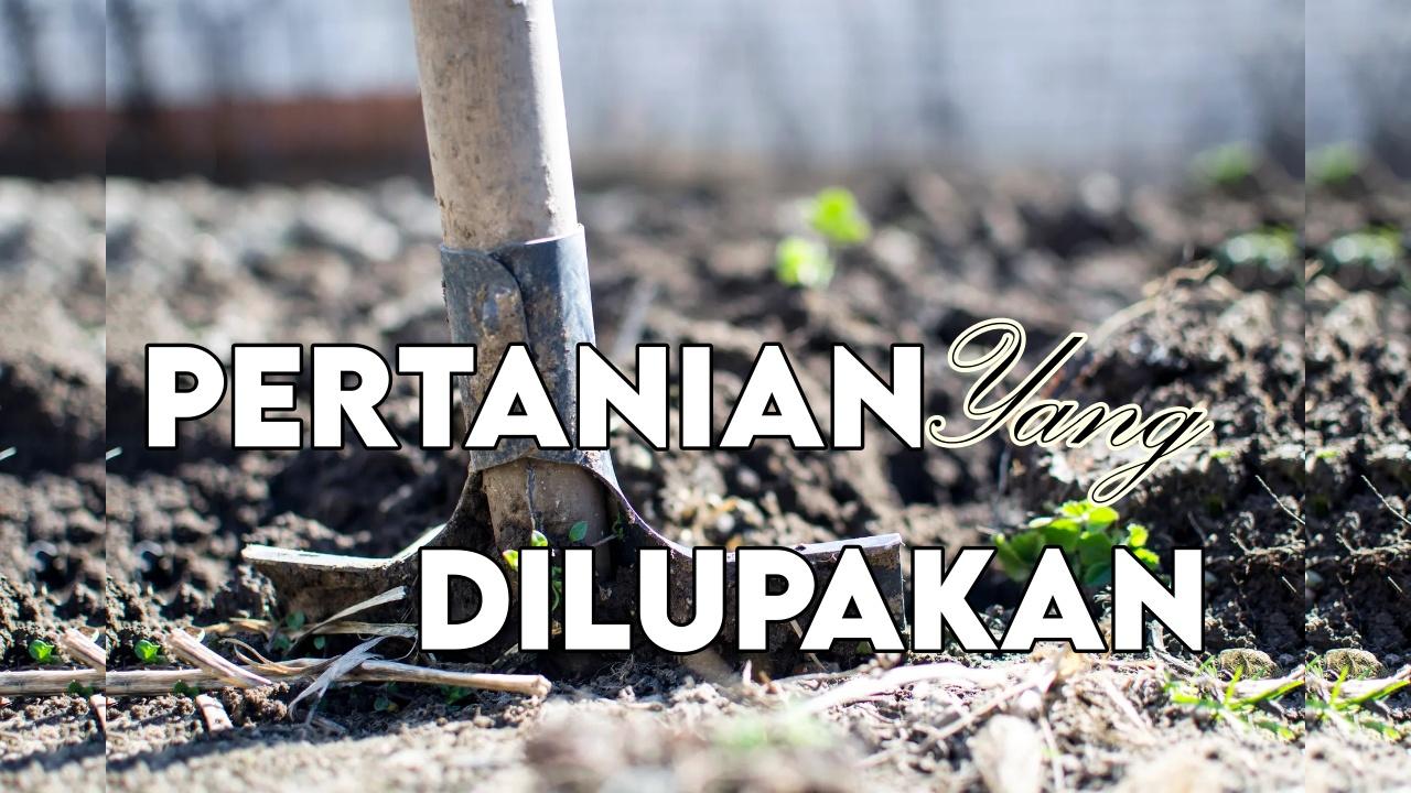 peluang usaha pertanian